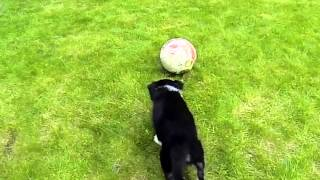 Puppy border collie slow mo Gopro Hero3 Black