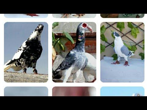 اجمل صور الطيور والحمام لشهر فبراير القسم 2 مع الطرب الحلبي الأصيل شاركونا رائيكم لأجمل طير