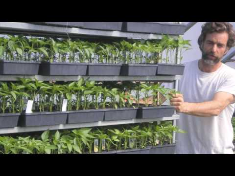 Richard Wiswall discusses the business of organic farming (4 minutes)