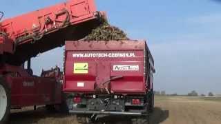 Przyczepa rolnicza AUTO-TECH PSB8 MAXX przy zbiorze marchwii