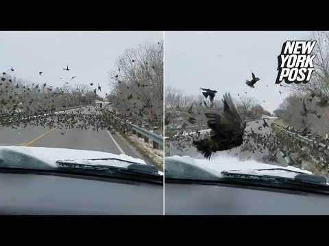 What the flock? Driver plows through birds on the road