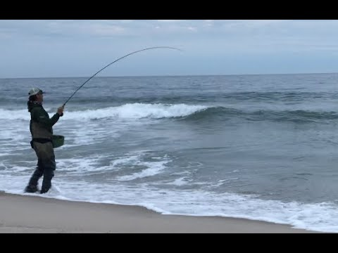 Surf Fly Fishing Tips - Shad & Striped Bass