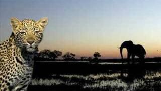 Urban Allstars - It began in africa