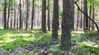 las jesienią i grzyby