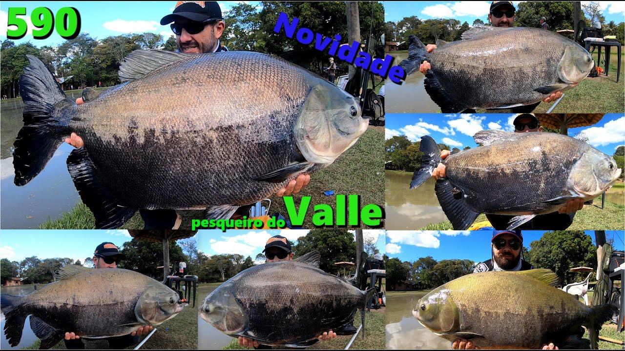 Valle - Pescaria 100% anteninhas nesse novo pesqueiro - Programa 590