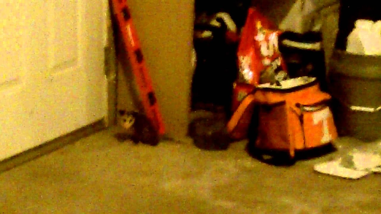 How To Get Rid Of A Possum In Your Garage opossum in my garage! - youtube