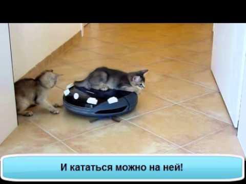 Фото пылесоса и кота
