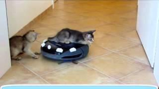 ДВА Кота и робот пылесос видео!