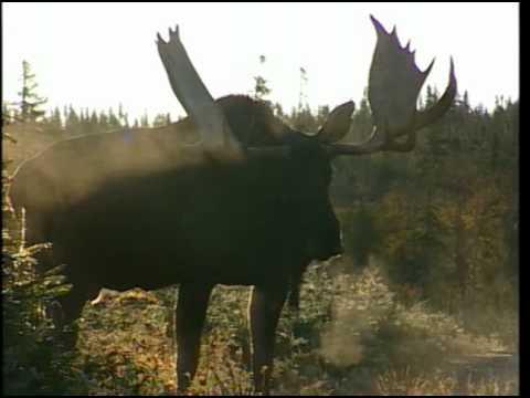 Partie de chasse en sologne 1979 - 2 part 2