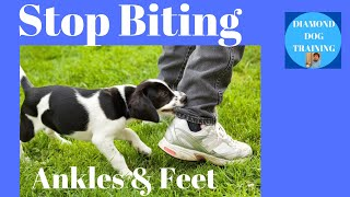 How To Stop Puppy From Biting Ankles And Feet When Ouch No Longer works