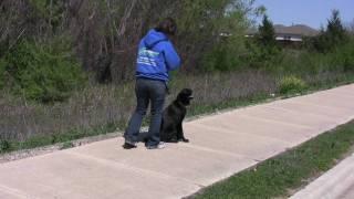 Austin Dog Training - Hank Part 3