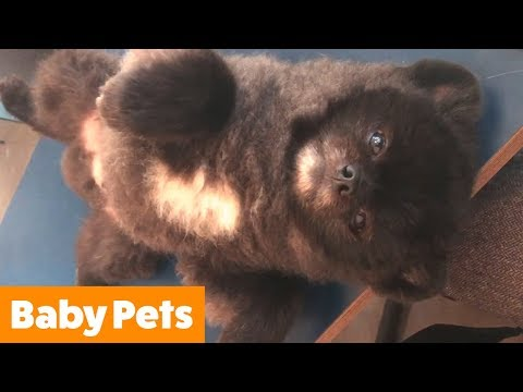 Cutest Kittens and Puppies | Funny Pet Videos