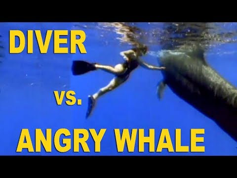 MASSIVE WHALE DRAGS DIVER TO THE DEEP!