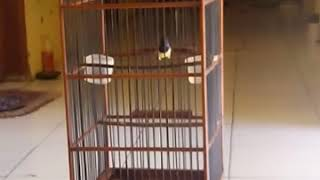 Sogok ontong gacor ngalas ngerol milik PUJI GIMEN