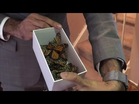 Business owner explains how butterflies are turning up dead due to shipping delays