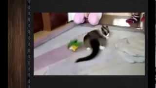Самые смешные приколы с животными и птицами 1 ютуб видео   1