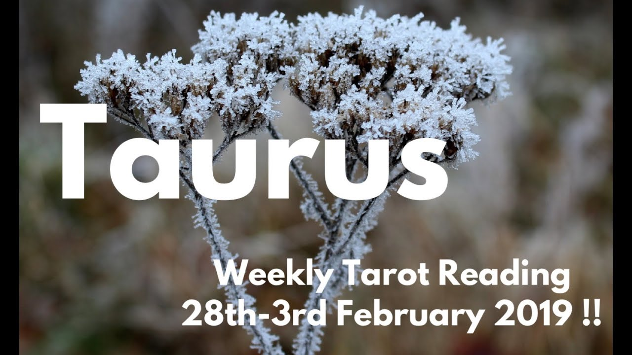 taurus weekly tarot february