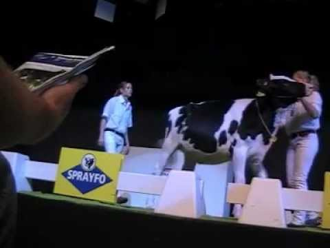 Holstein Master Sale Nr. 20