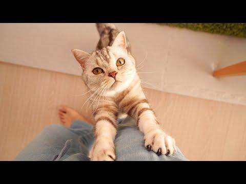 하루종일 쫓아다니면서 애교부리는 고양이가 있어요