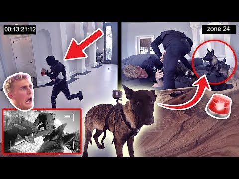 Thumbnail: HOW WILL APOLLO REACT TO A BURGLARY?! **PUPPY EXPERIMENT**