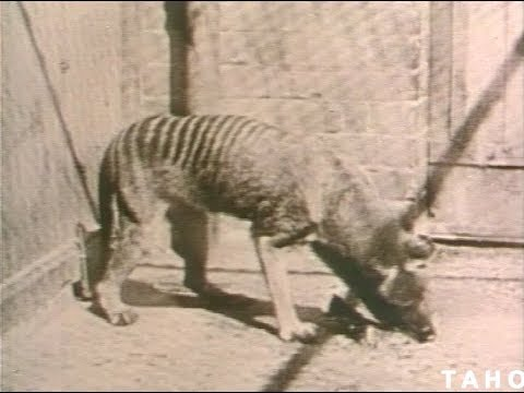 Tasmanian Wild Life (1973)