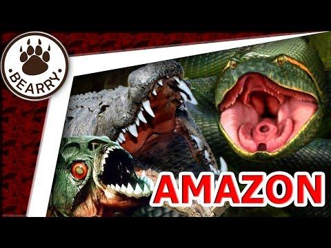 10 อันดับสัตว์อันตรายแห่งลุ่มน้ำอเมซอน | Top 10 Most Dangerous Animals Of The Amazon