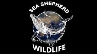 Sea Shepherd Wildlife - False Killer Whales