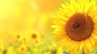 """Relaxing Instrumental music, Nature sounds """"Golden Shores"""" by Tim Janis"""