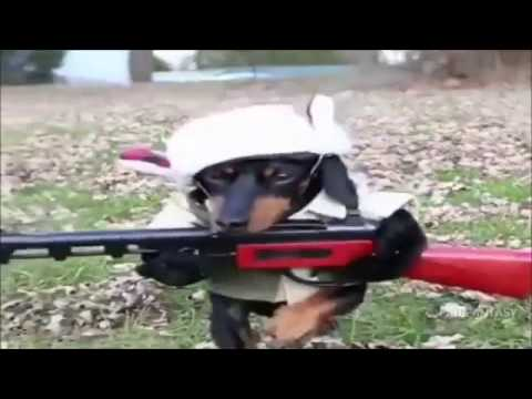 Funny Dog Fail Video Compilation – Ultimate Funny Dogs Video Clips