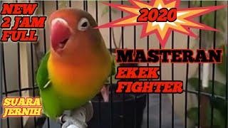 Download lagu masteran lovebird ngekek panjang TOPCER 2 jam NONSTOP terbaru 2020