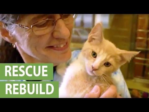 TV host Jackson Galaxy promotes animal shelter 'Rescue Rebuild' project