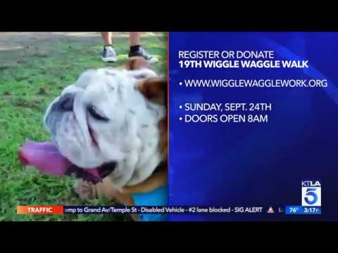 Lu Parker to Emcee Wiggle Waggle Walk- on KTLA News