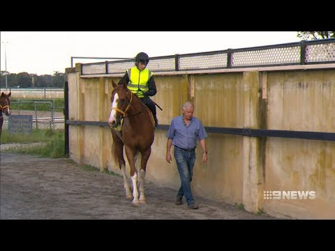 Racing Legends | 9 News Perth