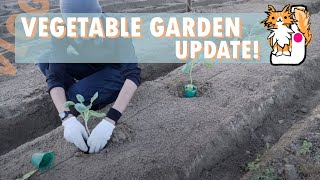 This is part 2 of my garden video (part 1: https://www.youtube.com/watch?v=Nvmkwt4ApWk). Because typhoons kept coming when I'm supposed to plant I ...