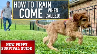 "NEW PUPPY SURVIVAL GUIDE: Train Your Dog to ""COME"" No Matter What!"