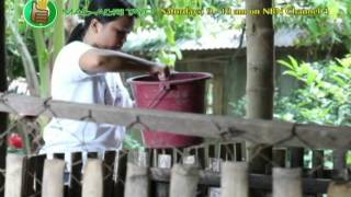 Native Swine for Lechon de Leche Production: Integration of Sakwa as Forage Feed Part 1