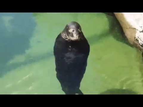 Spinning Seal