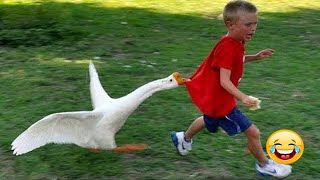 Funny Videos Animals - Funniest Geese Compilation - | LIFE FUNNY PETS 🐯🐶