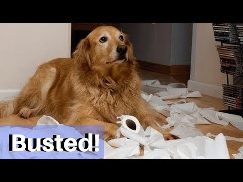 Guilty Dogs Caught On Camera! | Funny Dog Videos 2019