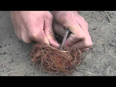 How to Start Fire with Flint and Knife