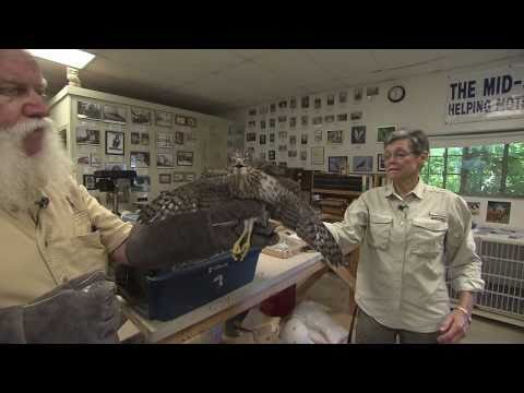 Tennessee Crossroads: Mid-South Raptor Center (2418-3)