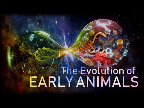 The Evolution Of Early Animals