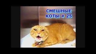 Приколы с кошками и котами #25. Подборка смешных и интересных видео с котиками и кошечками 2017