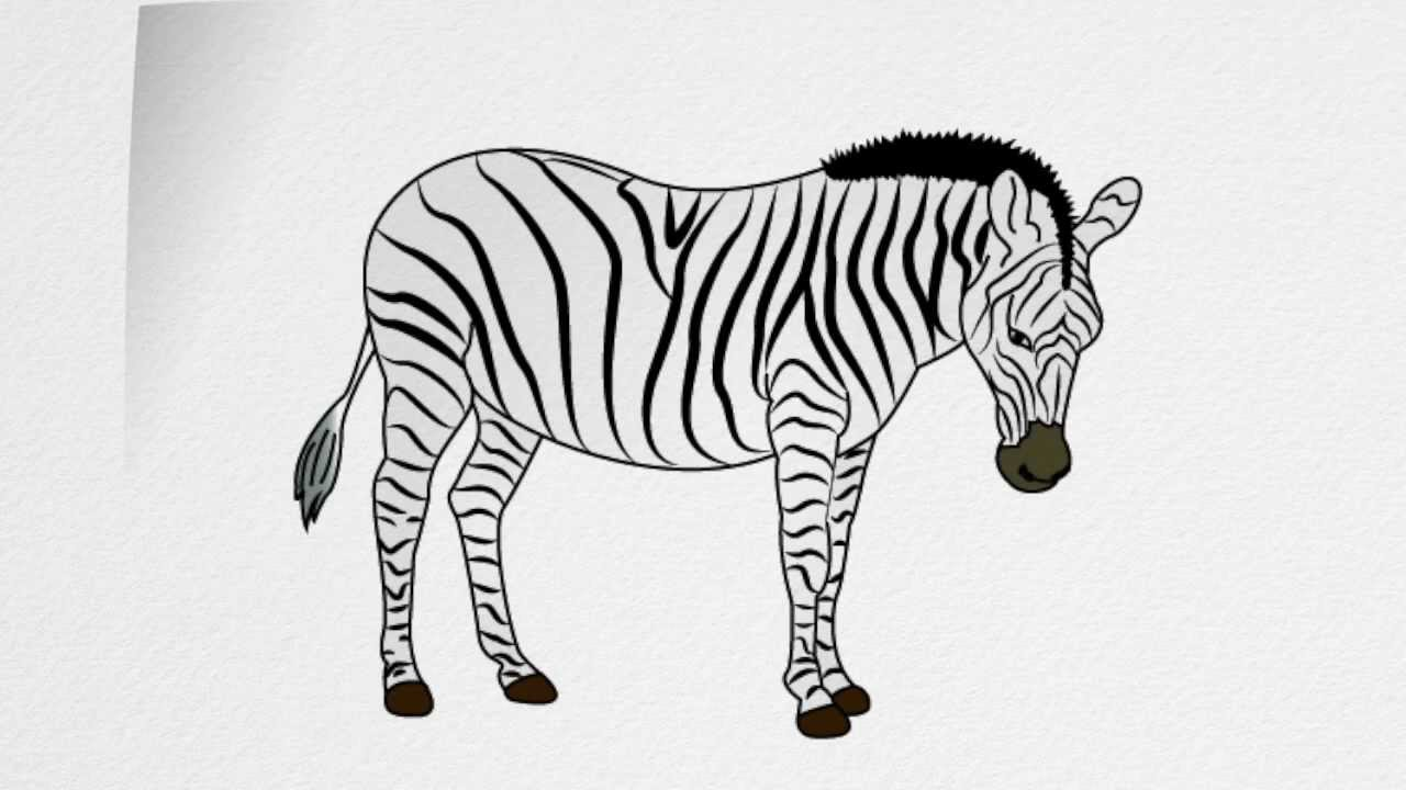 Line Drawing Zebra : How to draw a zebra step by youtube