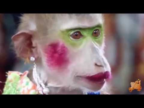 Видео приколы про обезьян смотреть онлайн