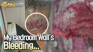 Red Blood Stain Leaking on the Wall in My Room