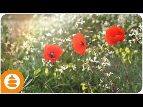 Spring Flowers Music, Relaxing Music Acoustic Guitar, Portuguese Guitar, 4k - 0017