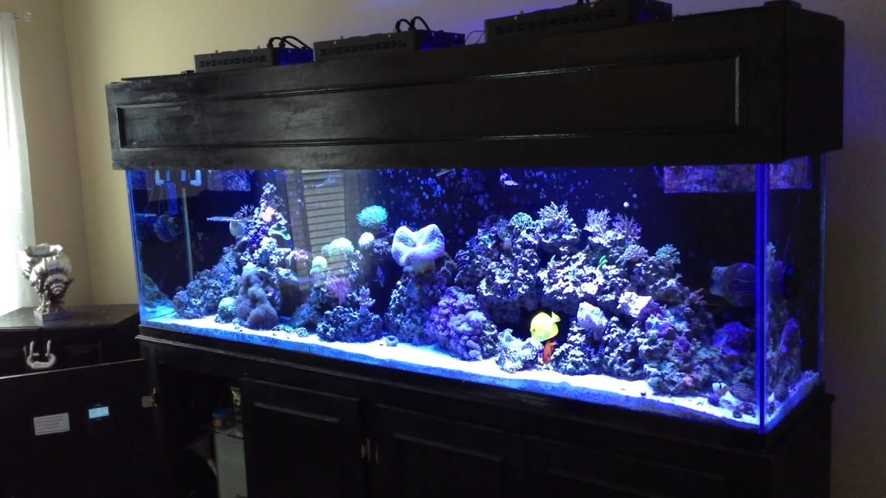 led t5 hybrid aquarium lighting cycle youtube. Black Bedroom Furniture Sets. Home Design Ideas