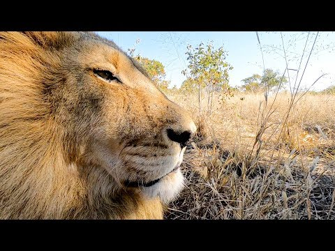 Spay Day - Part 2 | The Lion Whisperer