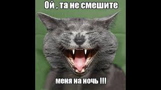 Веселые картинки. Кошки приколы смешные. Коты приколы.